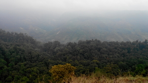 Hidden Treasure: VALPARAI!