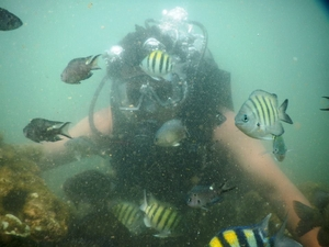 Scuba Diving & Water Sports Malvan\Tsunami Island