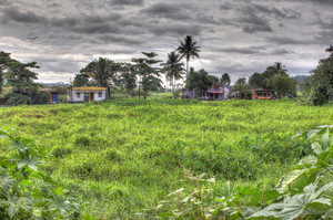 10 Reasons to Visit Kerala in the Monsoons