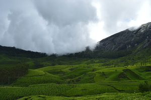 A dream called Munnar