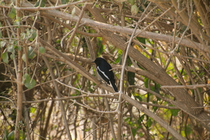 Backpacking With Birds – Bharatpur