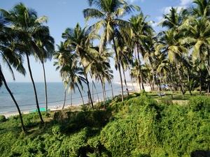 Goan Diaries