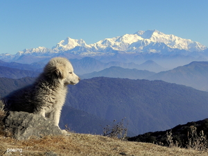 Weekend trek to Tumling from Darjeeling