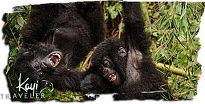 Rwanda: Express Gorilla Trekking