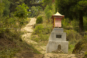 Of ravines, wildflowers and a Red Panda...Sandakphu