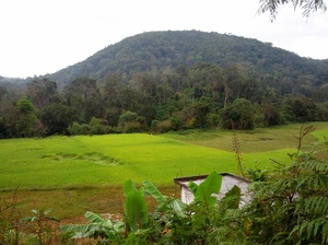 Coorg: Of coffee blossoms and cloudy retreats