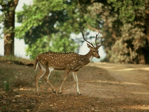 The Exotic Wild World of Madhya Pradesh