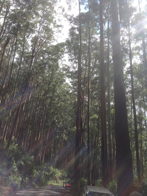 Flirting with nature at Coonoor