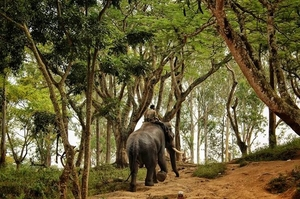 Coorg - Scotland of South India