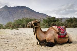Ladakh Academic Tour: The Cold Desert