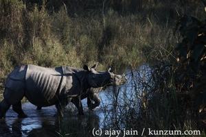 Go Wild in Chitwan in Nepal: February 24 – 28, 2016