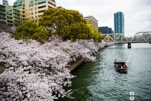 The first Hanami, Japan and Sakura