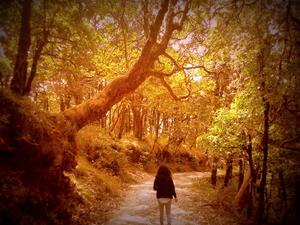 Almora: Wild and Serene