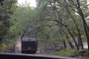Ranthambore: An Encounter With The Tiger Or Not...?