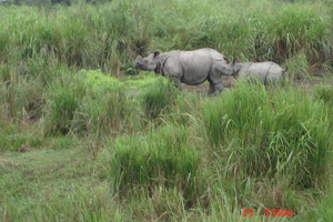 Rhino spotting: Kaziranga