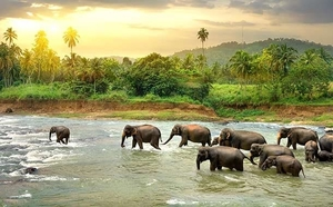 Exploring Sri Lanka In Summer- The Super Saver Way