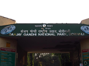 Travel Diary: Sanjay Gandhi National Park