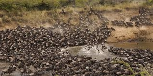 The Great African Migration