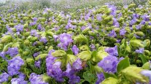 Kaas plateau-valley of flowers