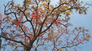 Malshej ghat during autumn.