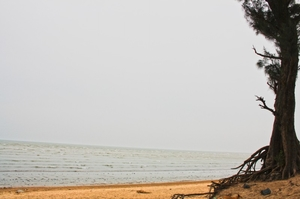Your Next Weekend at Lonely Vanishing Beach Chandipur