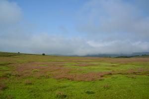 Plateau of Flowers-Kaas Plateau