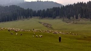 Unexplored Gem of Kashmir - Doodhpatri Green Valley