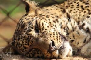 Trip into the wild: Nagzira Wildlife Sanctuary