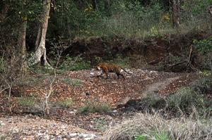 Nagzira - A destination for wildlife lovers