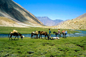 From cold Dessert to Lush Greenery - Trek through Bhaba Pass in Himachal