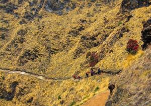 A simple yet beautiful trail - Kuari Pass