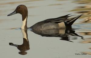 Bharatpur : My first Birding Trip