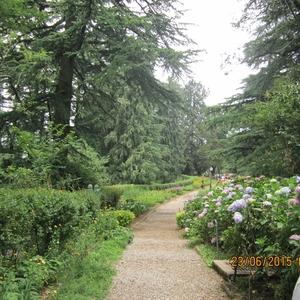 Shimla- An escape to nature.