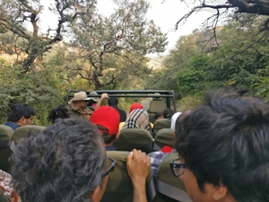 Solo Safari to Ranthambore National Park