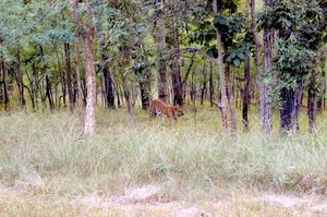 Jungle Trail @ Tadoba, Kanha and Pench