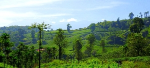 Wonderful journey to the Green Paradise of Kerala - Wayanad