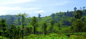Wonderful journey to the Green Paradise of Kerala - Wayanad