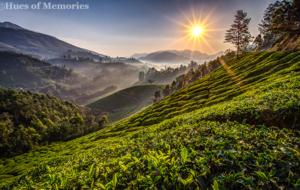 Munnar & Kumarakom -Timeless Beauty – Better than Words