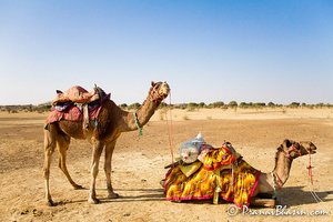 17 Unexpectedly Awesome Things To Do In The Indian Fairytale Called Rajasthan