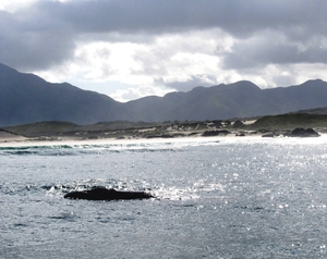 A Whale of a Time in Hermanus