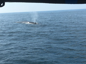 I saw the blue whale in Mirissa