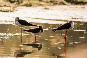 Managalajodi: A bird's paradise in Odisha