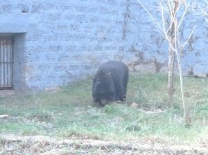 Wildlife, Nature and Heritage: Nandankanan
