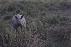 Kaziranga: Conserving Wildlife And World Heritage