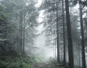 Evil At the Heart of the Black Forest