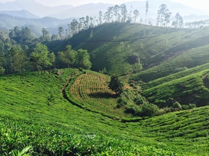 Munnar - Heaven on Earth