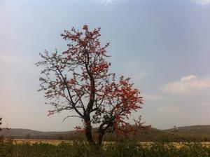 Trekking in the wilderness- Delawadi, Bhopal