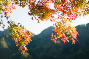 Autumn 2014: Lake Miyagase