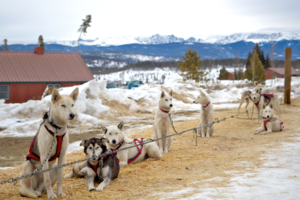 You Don't Have To Go To Alaska To Try Dog Sledding!