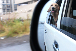 Why You Should Go On A Trip With Your Dog